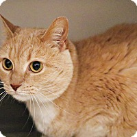 Adopt A Pet :: Catika - Lincoln, NE