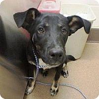 Adopt A Pet :: Emily - Las Vegas, NV