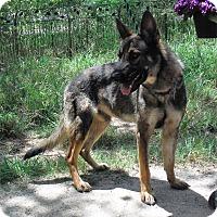 Adopt A Pet :: SPARTCUS - SAN ANTONIO, TX