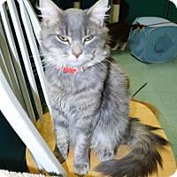 Adopt A Pet :: Duke-Cat of the Week! - San Jacinto, CA