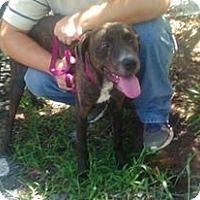 Adopt A Pet :: Maverick - Wytheville, VA