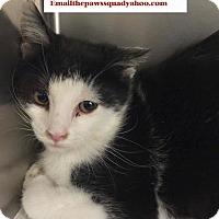 Domestic Mediumhair Kitten for adoption in Chapmanville, West Virginia - Sept C kitten
