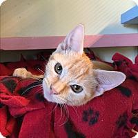 Adopt A Pet :: Norman - Leander, TX