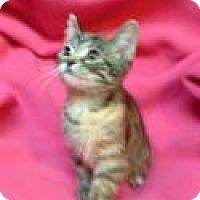 Adopt A Pet :: Ginger Spice - Newport, KY
