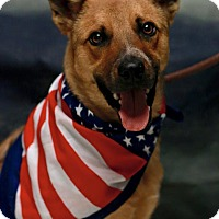 German Shepherd Dog Mix Dog for adoption in Twin Falls, Idaho - Balto