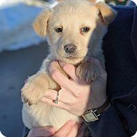 Adopt A Pet :: Tristen - Sawyer, ND