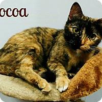 Adopt A Pet :: COCOA - Laplace, LA