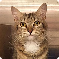 Adopt A Pet :: Samantha - Tucson, AZ