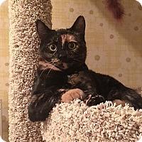 Adopt A Pet :: Annie - Cleveland, OH