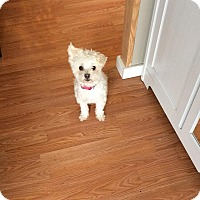 Adopt A Pet :: Hazel - Edmonton, AB