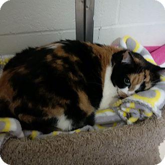 fat cat quincy