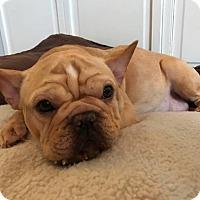 Adopt A Pet :: Roxy - Streamwood, IL