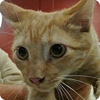 Adopt A Pet :: Romo - white settlment, TX
