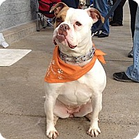 Adopt A Pet :: Kali - Trenton, NJ