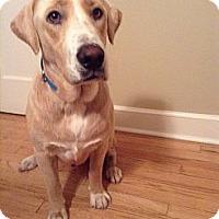 Adopt A Pet :: Levi - Plainfield, CT