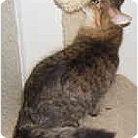 Adopt A Pet :: Kestrel - Dallas, TX