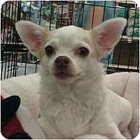 Adopt A Pet :: Posey - Phoenix, AZ
