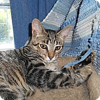 Adopt A Pet :: Sue - Richland, MI