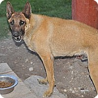 Adopt A Pet :: Malfoi - Hamilton, MT