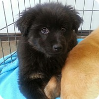 Adopt A Pet :: NinaADOPTED! - Chicago, IL