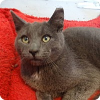 Adopt A Pet :: Grayson-Adoption Pending! - Colmar, PA