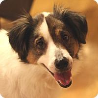 Adopt A Pet :: Pinkerton - Romeoville, IL