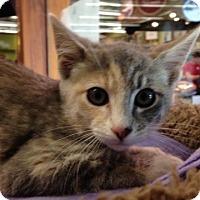 Adopt A Pet :: Abby - Morgan Hill, CA