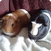 Adopt A Pet :: Colin & Rex - San Antonio, TX