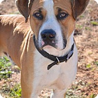 Adopt A Pet :: Trooper - Midland, TX
