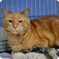 Adopt A Pet :: Shane - Brooklyn, NY