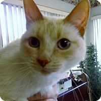 Adopt A Pet :: Sassy - Muscatine, IA