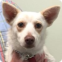 Adopt A Pet :: Janet - Orlando, FL