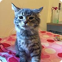 Adopt A Pet :: hazel - Salem, OH