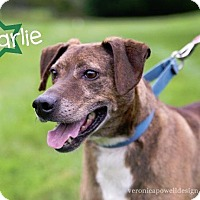 Terrier (Unknown Type, Small) Dog for adoption in Kendallville, Indiana - Charlie