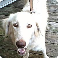 Adopt A Pet :: Lola III - BIRMINGHAM, AL