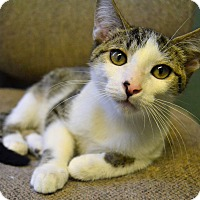 Adopt A Pet :: Parker - Michigan City, IN