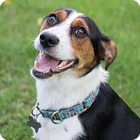Adopt A Pet :: Sparrow - Grand Rapids, MI