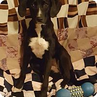 Adopt A Pet :: Annie - Burlington, VT