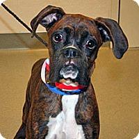Adopt A Pet :: Bert - Wildomar, CA