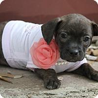 Adopt A Pet :: Ruby - Dalton, GA