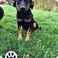Adopt A Pet :: Hambone - Kimberton, PA