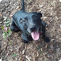 Adopt A Pet :: Betty - Jesup, GA