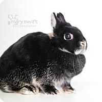 Adopt A Pet :: Kix - Reisterstown, MD