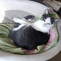 Adopt A Pet :: Paul - Quail Valley, CA