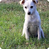 Adopt A Pet :: Sam - Snyder, TX
