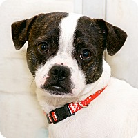 Adopt A Pet :: Frosty - Westfield, NY