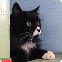 Adopt A Pet :: Callie - Savannah, GA