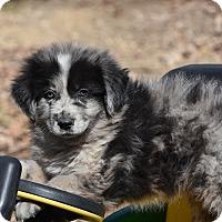 Adopt A Pet :: Bartlett - Groton, MA