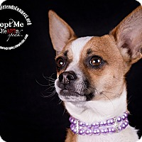 Adopt A Pet :: Charli - Lodi, CA