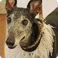 Adopt A Pet :: Wilma - Brandon, FL